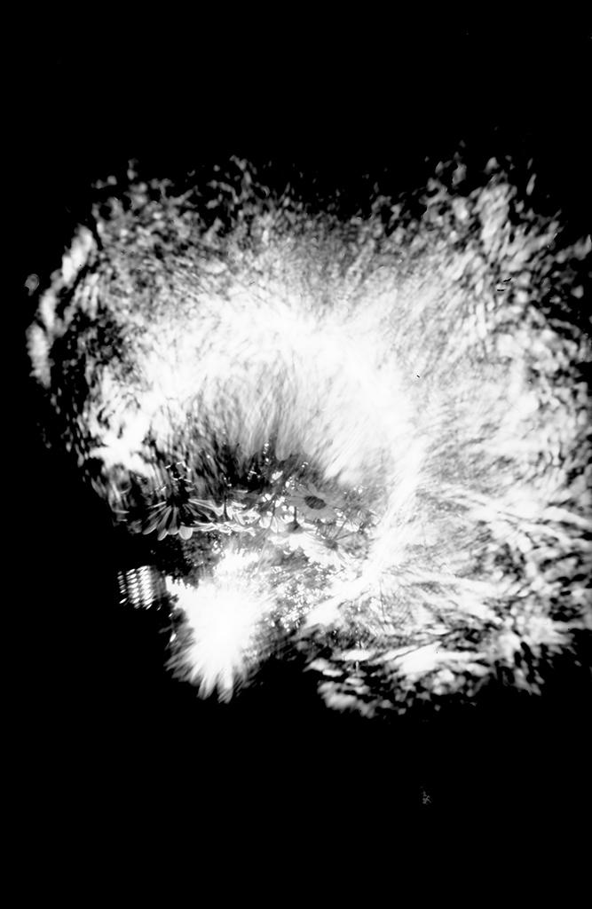 Pflanzen aufgenommen mit einer Camera Obscura auf Papiernegativ